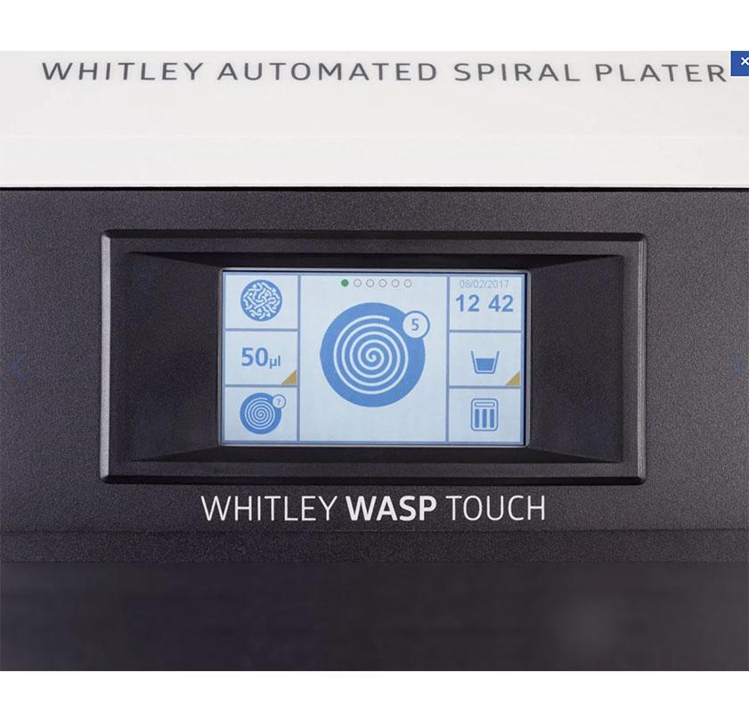 wasp8